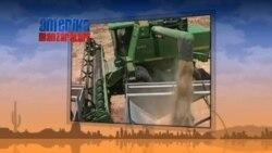 AQSh makkajo'xorisi Xitoy bozoriga kiritilmayapti - China US Corn/GMO