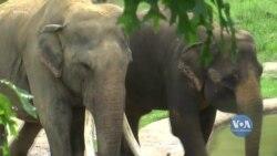 У Вашингтоні, після місяців заборони, відкрили зоопарк. Відео