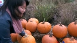 美语怎么说 (16) Pumpkin Patch! - 南瓜园的回忆