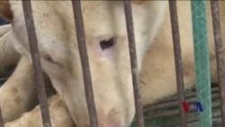 美议员提出决议案谴责玉林狗肉节