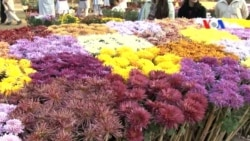 اسلام آباد میں گل داؤدی کی نمائش