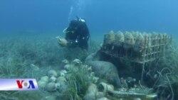 Hầm rượu dưới đáy biển