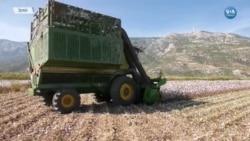 Kuraklık Tarımsal Üretimi Vuruyor