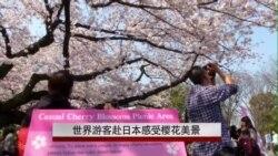 世界游客赴日本感受樱花美景