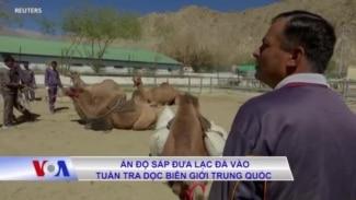 Ấn Độ sắp đưa lạc đà vào tuần tra dọc biên giới Trung Quốc
