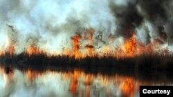 تداوم آتشسوزی عمدی در تالاب انزلی - عکس از رسانههای ایران
