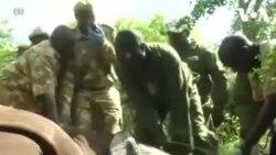 ԱՌԱՆՑ ՄԵԿՆԱԲԱՆՈՒԹՅԱՆ. Քենիայում ռնգեղջուրներին սկսել են համարակալել