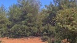Milas Fesleğen Köyü'nde Yangın Sürüyor