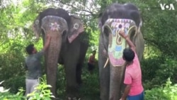 """Indian Park Provides its Elephants """"Day Off"""" From Work on Hindu Festival"""