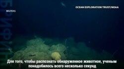 Редкий глубоководный осьминог попал в объективы