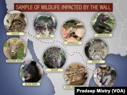 Muestra de animales silvestres que serían afectados por la construcción de un muro en la frontera con México.