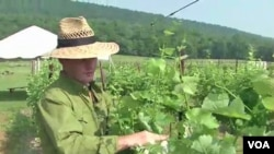 Enolog Sebastien Marquet pregledava vinovu lozu u vinariji Doukenie u virginijskom mjestu Purcellville