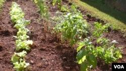 Las comunidades indígenas aún practican la agricultura de subsistencia sobre suelos enriquecidos con materias orgánicas.