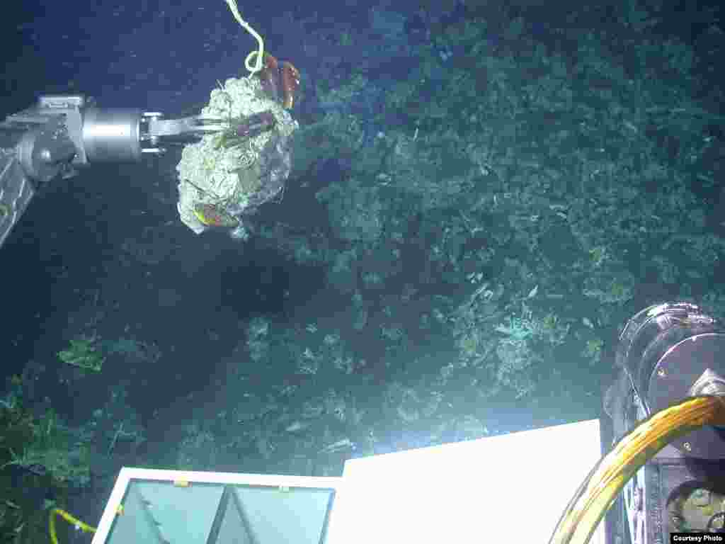 Using the manipulator arm of the submersible Alvin to collect carbonate and associated animals from an active methane seep off the coast of Costa Rica. (L. Levin, SIO)