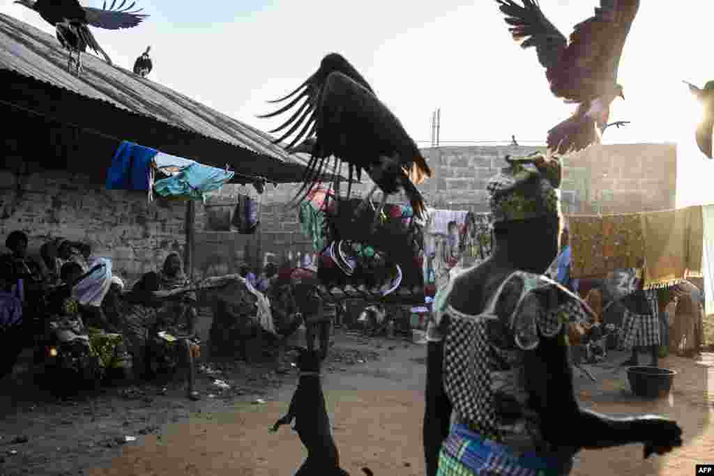Hooded vultures are chased away by a dog as they look for scraps after a family slaughtered a cow at a funeral celebration in Bissau, Guinea-Bissau, Nov. 26, 2019.
