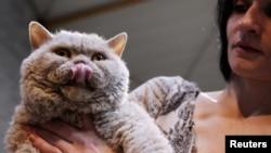 Seorang perempuan memegang kucing, yang ternyata bisa menularkan parasit yang meningkatkan risiko bunuh diri. (Photo: VOA)