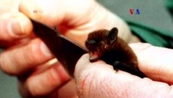 Imagen termal ayuda a murciélagos