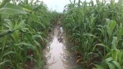 Déby appelle à la rentabilité agricole en Afrique
