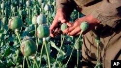 بیشترین تریاک ایران از افغانستان وارد می شود