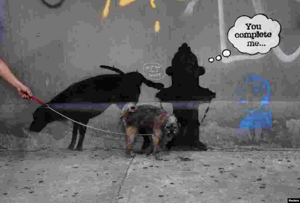 """Một con """"đánh dấu"""" lên một tác phẩm mới của nghệ sĩ vẻ tranh đường phố Banksy người Anh trên đường 24th tại thành phố New York, ngày 3 tháng 10 năm 2013."""