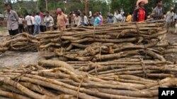 Nhiều nhà hoạt động Campuchia lâu nay lên tiếng phản đối nạn khai thác rừng trái phép ở nước này.