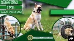 მესაზღვრე ძაღლი - მარკი