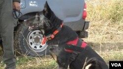Psi u potrazi za povređenim i uginulim retkim pticama (Foto: Društvo za zaštitu i proučavanje ptica Srbije)