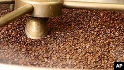 Processamento do café