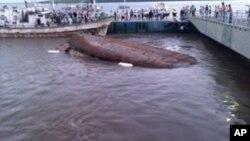 """O batelão """"Cucua"""" naufragado no porto de Quelimane"""
