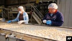 资料照:加州大蒜种植场克里斯托弗农场的工人。(2010年7月22日)