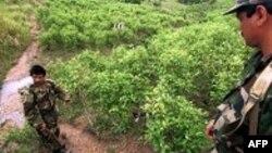 Un equipo de forenses, escoltado por soldados colombianos, adelanta el proceso de identificación de los cuerpos en las fosas.