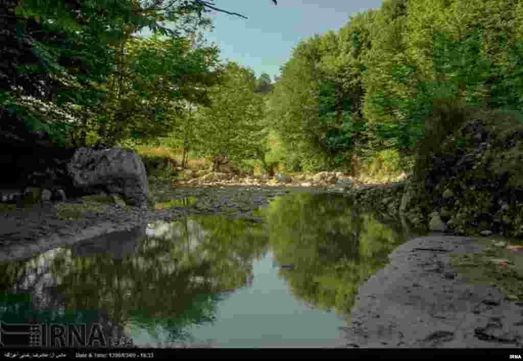 طبیعت بهاری مازندران عکس: غلامرضا رضایی آغوزگله