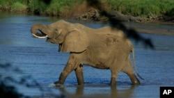 Un éléphant dans le parc national de Samburu, Kenya, le 29 janvier 2003