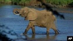 Ảnh tư liệu - Một con voi ở công viên quốc gia Samburu, Kenya.