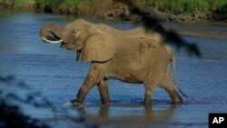 El número de elefantes en África ha disminuido en los últimos diez años en un cincuenta por ciento.