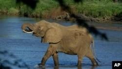 Un éléphant pris en photo au Kenya, traversant la rivière Samburu le 29 janvier 2003.