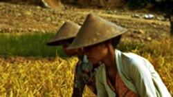 سازمان ملل متحد اعلام کرد قيمت غذا به گونه ای هشدار دهنده افزايش يافته است