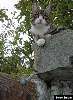 Cats often like to be in high places to check their surroundings.