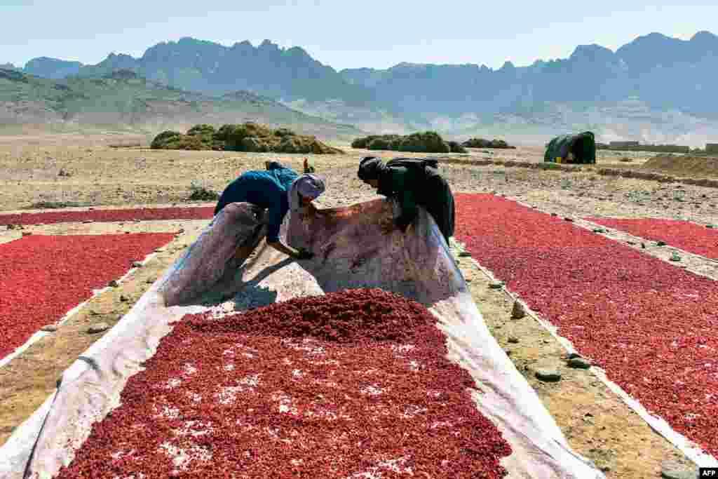 Farmers sundry pomegranate seeds in Kandahar, Afghanistan.