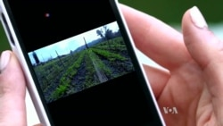 Farms Go Digital: Food Startups Connect Farmers to Foodies