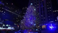 ต้นคริสต์มาสรีไซเคิล ส่งผ่านความสุข กลายเป็นบ้านราคาย่อมเยาแด่ชาวอเมริกัน