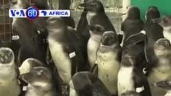 Manchetes Africanas 10 Fevereiro 2014