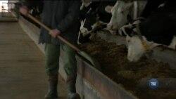 В Україні відкрили лабораторію, що виводить молочну галузь на новий рівень. Відео