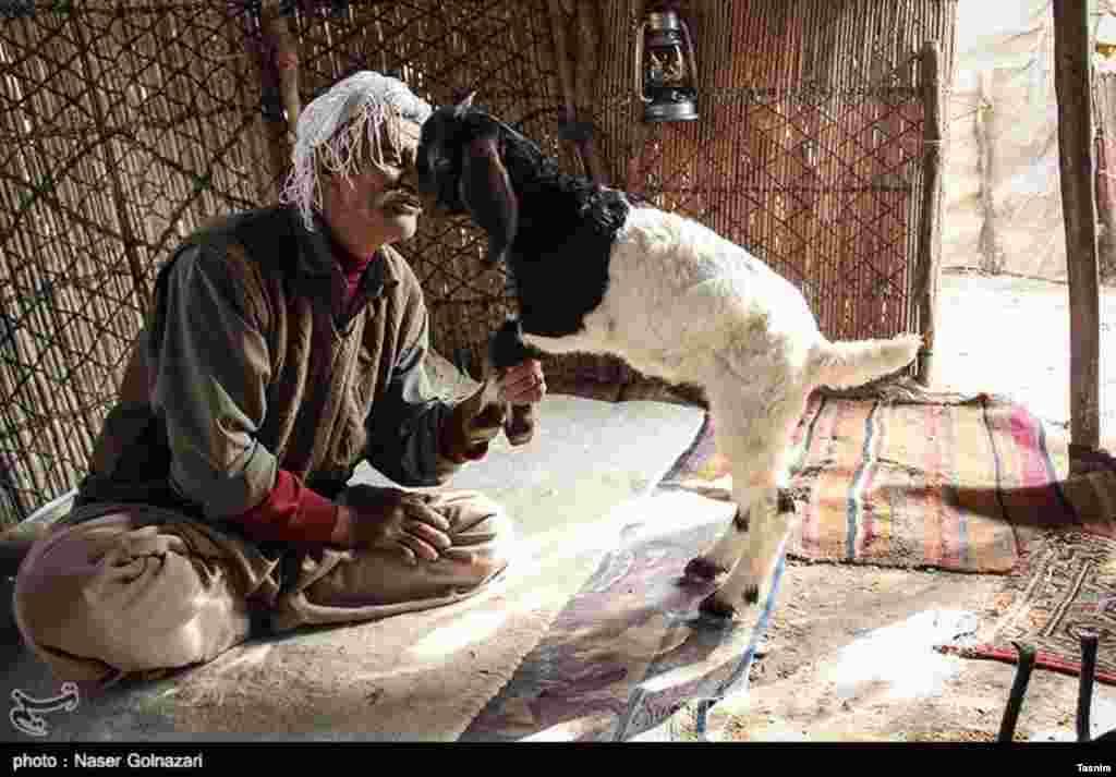 عکسی از زندگی عشایر در ایلام عکس: ناصر گل نظری