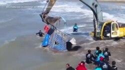Giải cứu cá voi sát thủ