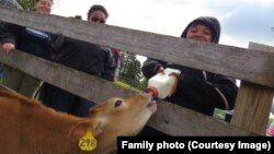 Lalah Williams feeding a calf during a Girl Scout visit to a farm.