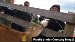 Lalah Williams feeding a calf during a Girl Scout visit to a farm.