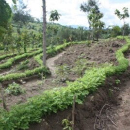 Farmers in Indonesia get better crop production and an improved environment with terrace farming