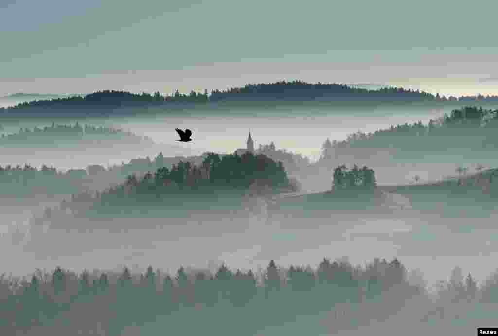 پرواز یک پرنده در روزی مه آلود در کشور اسلوونی.
