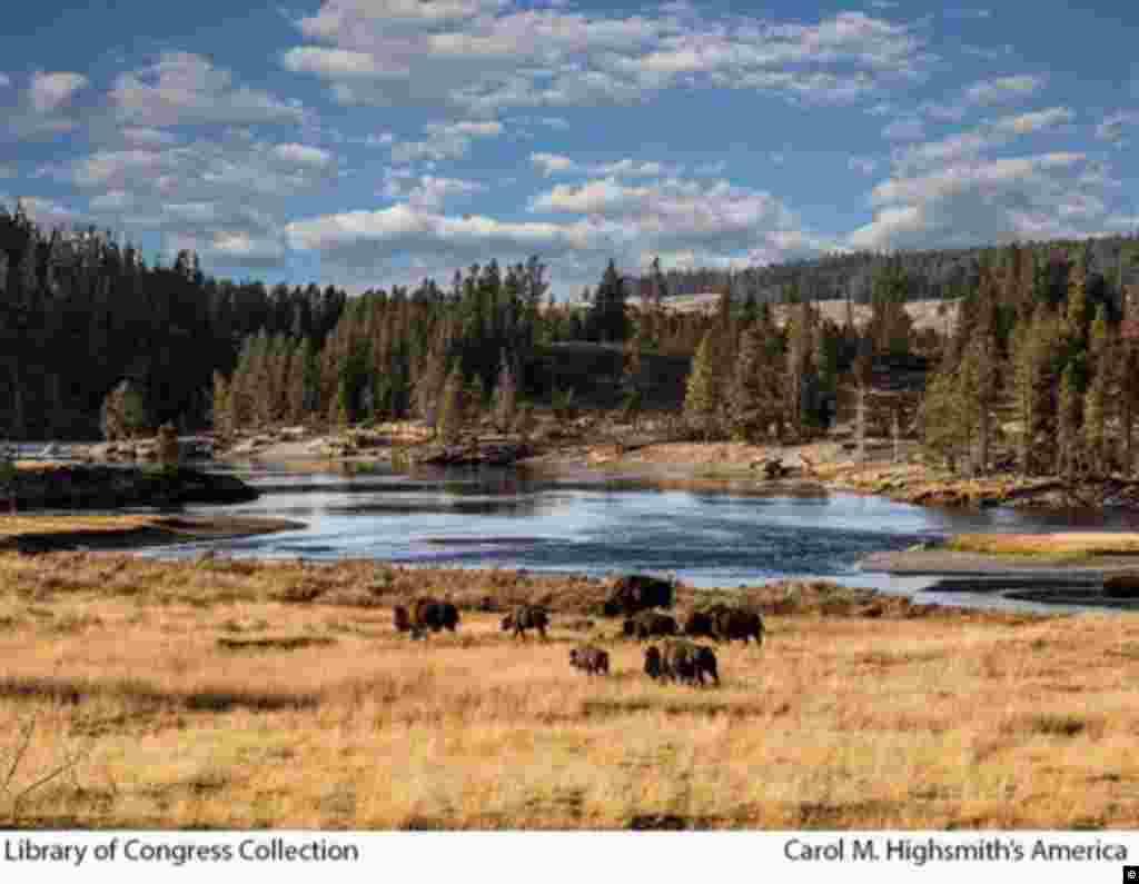 Yellowstone Ulusal Parkı, Wyoming.